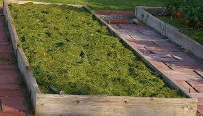 Reuse Your Grass Clippings!